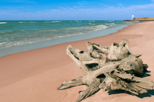 Driftwood Near Big Sable Point...