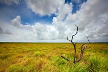 Mad Island Marsh Preserve, Tex...