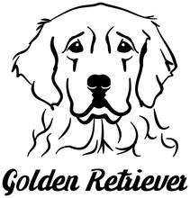 Golden Retriever Head
