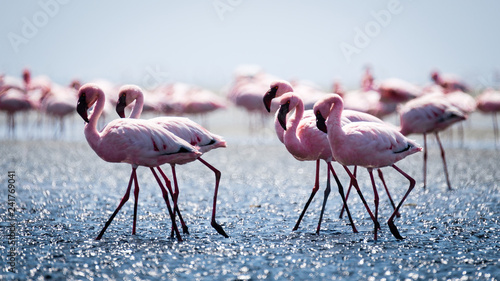 Spoed Foto op Canvas Flamingo Flamingos
