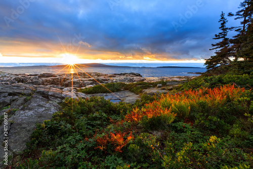 Wall Murals Coast Acadia National Park Ocean Sunset With Red Ferns