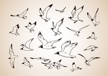 Sketch Of Flying Seagulls. Set Of Silhouettes Of Seagulls On Light Background. Hand Drawn Vector Illustration.