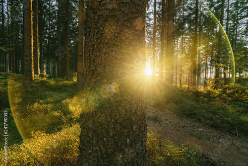 Foto op Canvas Weg in bos Silent Forest in spring with beautiful bright sun rays on a tree trunk - wanderlust