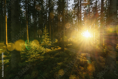 Foto op Canvas Tuin Silent Forest in spring with beautiful bright sun rays