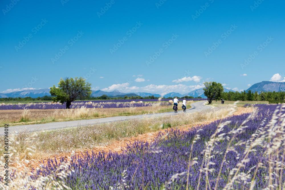 Fototapety, obrazy: Lavender 20