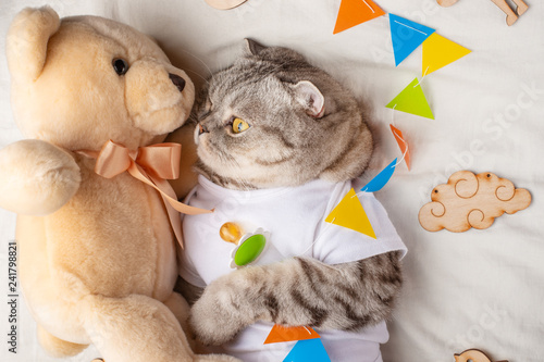 Cute Cat With A Teddy Bear On A Light Background With Toys Funny