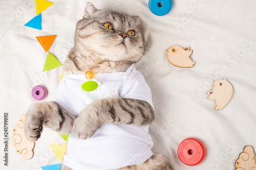 Fotografie, Obraz  Cute Kitten, on a light background with children's toys, and a pacifier