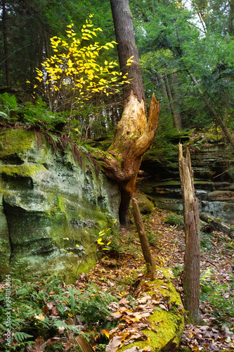 Healthy vegetation on rocks of Ritchie Ledges in northern Ohio. Canvas-taulu