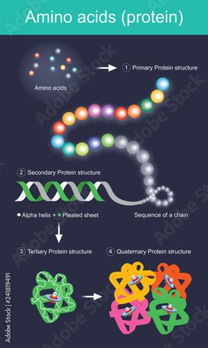 Amino Acids Canvas Print