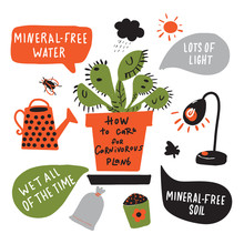 How To Grow Carnivorous Plant. Funny Hand Drawn Infographic Poster About Venus Flytrap. Vector Design.