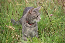 Katze Stehend In Wiese Nach Er...