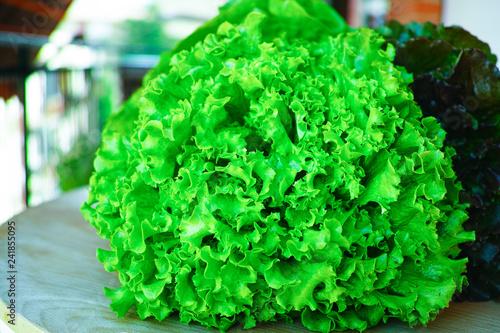 Fotografía  Fresh organic green lettuce leaf vegetable ready to eat in salade, healthy food