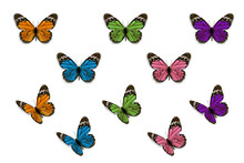 Various Butterfly On White Background, Vector Design.