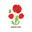 ANZAC DAY. Bouquet of poppy flowers. Vector illustration