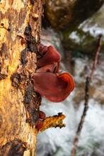 Fungus In A Trunk