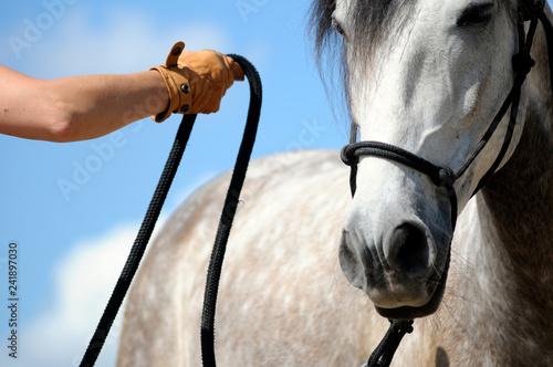 Fotografía horsemanship training