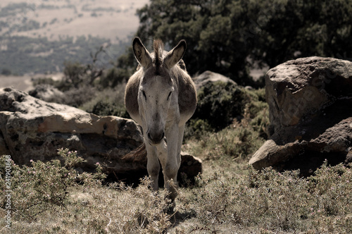 Poster Rhino donkey in the mountains