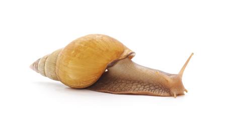 One big snail.