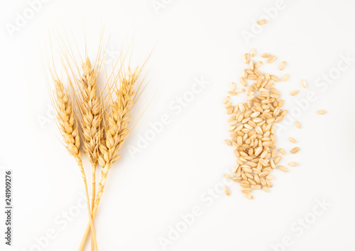 spike and wheat grains