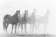 Black And White Photo Of Ranch Horses In A Row, Fading Into A Dusty Background.