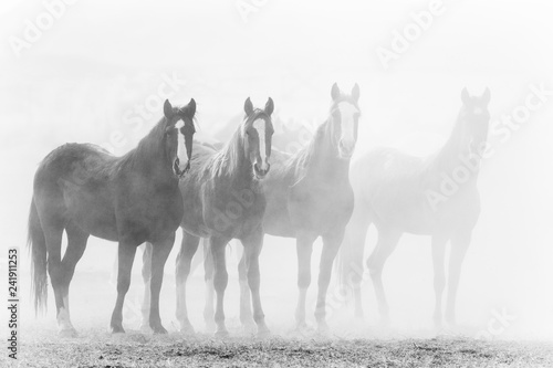 Foto op Canvas Paarden Black and white photo of ranch horses in a row, fading into a dusty background.