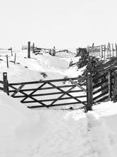 Monochrome Image Of A Snow Cov...