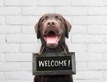 Happy Dog With Chalkboard With Welcome Text Says Hello Welcome We're Open Against White Brick Outdoor Wall