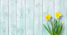 Amazing Spring Background With Yellow Daffodils Flowers