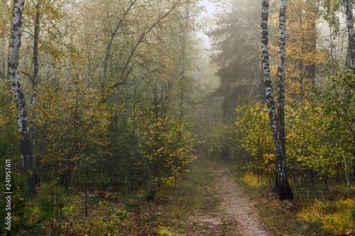 Poster Berkbosje Forest. Fog. Autumn leaves. Autumn colors.