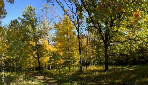 Foto op Aluminium Pistache Trees in Sofiyivka Park in Uman, Ukraine