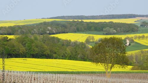 Foto auf Gartenposter Himmelblau Paysage de campagne au printemps avec des champs de colza en fleur, en Champagne (France)
