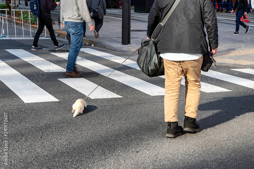 A man walking his pet ferret at a crosswalk in Tokyo, Japan Canvas Print