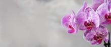 Violet Orchid On Grey Concrete...