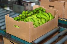 Banana Box Full Of Ripe Green ...