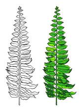 Tropical Leaf. Botanical Hand Drawn Illustration On White Background.