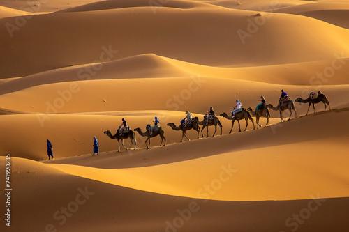 Keuken foto achterwand Kameel Camels in desert
