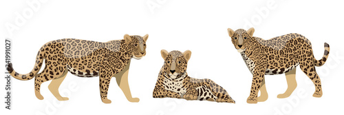 Set of wild cats jaguars or leopards in different poses Poster Mural XXL