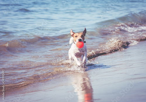 Photo  Happy dog playing with toy ball at beach runs from sea water