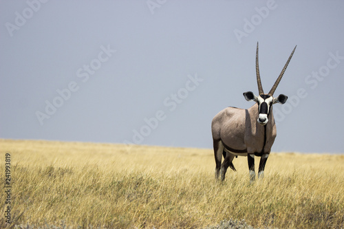 Door stickers Antelope oryx namibia