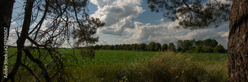 field and silhouettes of trees in the forest and sky with clouds Slika na platnu