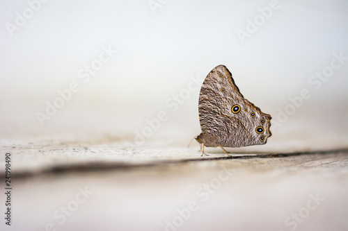 Fotobehang Vlinders in Grunge wild butterfly on concrete floor