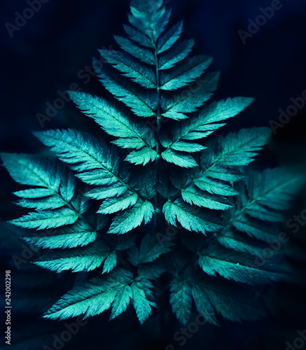 fern leaf full screen