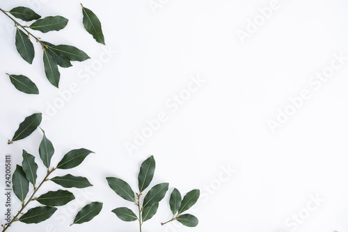 Obraz na plátně Isolated background with green daphne leaves