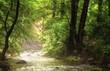 Fluss im Wald mit leichtem Nebel darüber, auf den Licht fällt