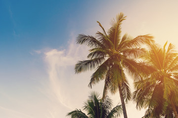 Coconut palm tree at tropical coast with vintage tone