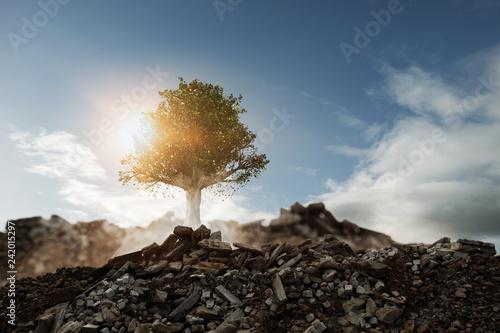 Photo Baum wächst auf Schutthaufen