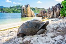 Aldabra Giant Tortoise, Turtle...