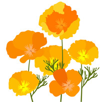 Vector California Poppies