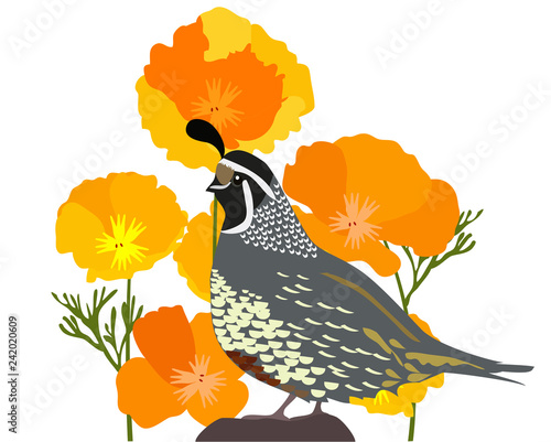 Photo Poppies and Quail.