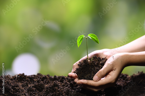 Foto op Aluminium Lente Hands holding and caring a green young plant
